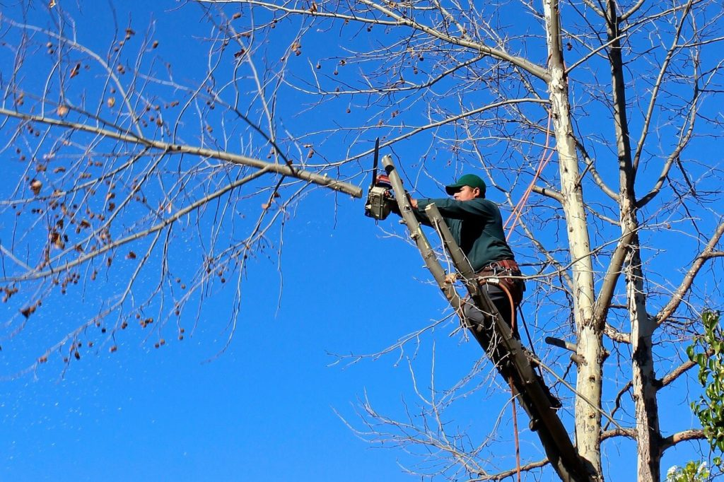 Contact Us-Oakland Park FL Tree Trimming and Stump Grinding Services-We Offer Tree Trimming Services, Tree Removal, Tree Pruning, Tree Cutting, Residential and Commercial Tree Trimming Services, Storm Damage, Emergency Tree Removal, Land Clearing, Tree Companies, Tree Care Service, Stump Grinding, and we're the Best Tree Trimming Company Near You Guaranteed!
