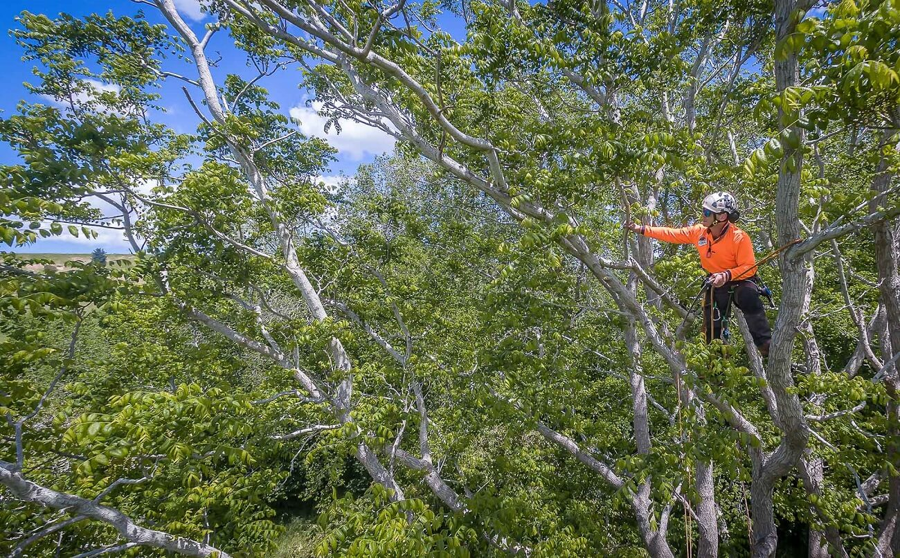Oakland Park FL Tree Trimming and Stump Grinding Services Home Page Image-We Offer Tree Trimming Services, Tree Removal, Tree Pruning, Tree Cutting, Residential and Commercial Tree Trimming Services, Storm Damage, Emergency Tree Removal, Land Clearing, Tree Companies, Tree Care Service, Stump Grinding, and we're the Best Tree Trimming Company Near You Guaranteed!