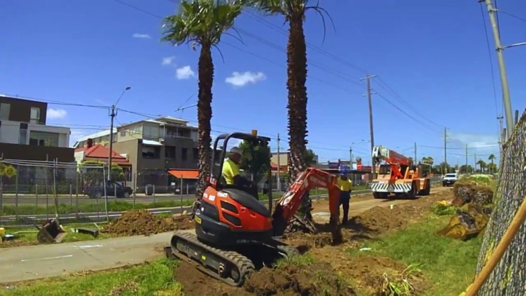 Palm Tree Removal-Oakland Park FL Tree Trimming and Stump Grinding Services-We Offer Tree Trimming Services, Tree Removal, Tree Pruning, Tree Cutting, Residential and Commercial Tree Trimming Services, Storm Damage, Emergency Tree Removal, Land Clearing, Tree Companies, Tree Care Service, Stump Grinding, and we're the Best Tree Trimming Company Near You Guaranteed!
