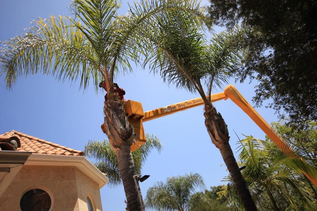 Palm Tree Trimming-Oakland Park FL Tree Trimming and Stump Grinding Services-We Offer Tree Trimming Services, Tree Removal, Tree Pruning, Tree Cutting, Residential and Commercial Tree Trimming Services, Storm Damage, Emergency Tree Removal, Land Clearing, Tree Companies, Tree Care Service, Stump Grinding, and we're the Best Tree Trimming Company Near You Guaranteed!