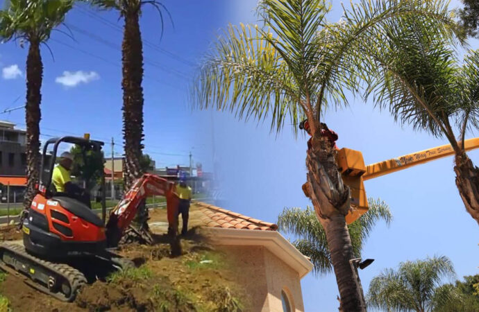 Palm tree trimming & palm tree removal-Oakland Park FL Tree Trimming and Stump Grinding Services-We Offer Tree Trimming Services, Tree Removal, Tree Pruning, Tree Cutting, Residential and Commercial Tree Trimming Services, Storm Damage, Emergency Tree Removal, Land Clearing, Tree Companies, Tree Care Service, Stump Grinding, and we're the Best Tree Trimming Company Near You Guaranteed!