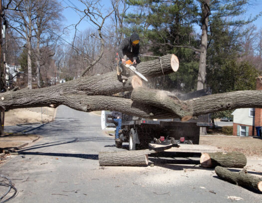 Residential Tree Services-Oakland Park FL Tree Trimming and Stump Grinding Services-We Offer Tree Trimming Services, Tree Removal, Tree Pruning, Tree Cutting, Residential and Commercial Tree Trimming Services, Storm Damage, Emergency Tree Removal, Land Clearing, Tree Companies, Tree Care Service, Stump Grinding, and we're the Best Tree Trimming Company Near You Guaranteed!