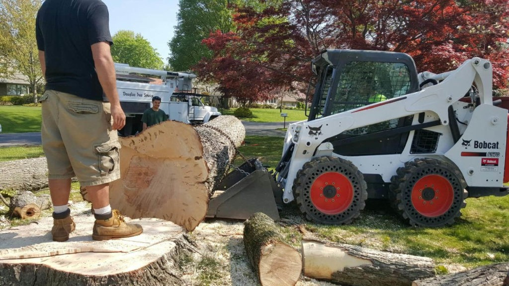 Services-Oakland Park FL Tree Trimming and Stump Grinding Services-We Offer Tree Trimming Services, Tree Removal, Tree Pruning, Tree Cutting, Residential and Commercial Tree Trimming Services, Storm Damage, Emergency Tree Removal, Land Clearing, Tree Companies, Tree Care Service, Stump Grinding, and we're the Best Tree Trimming Company Near You Guaranteed!