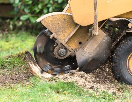 Stump Grinding-Oakland Park FL Tree Trimming and Stump Grinding Services-We Offer Tree Trimming Services, Tree Removal, Tree Pruning, Tree Cutting, Residential and Commercial Tree Trimming Services, Storm Damage, Emergency Tree Removal, Land Clearing, Tree Companies, Tree Care Service, Stump Grinding, and we're the Best Tree Trimming Company Near You Guaranteed!