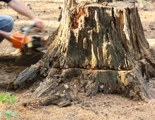 Stump Removal-Oakland Park FL Tree Trimming and Stump Grinding Services-We Offer Tree Trimming Services, Tree Removal, Tree Pruning, Tree Cutting, Residential and Commercial Tree Trimming Services, Storm Damage, Emergency Tree Removal, Land Clearing, Tree Companies, Tree Care Service, Stump Grinding, and we're the Best Tree Trimming Company Near You Guaranteed!