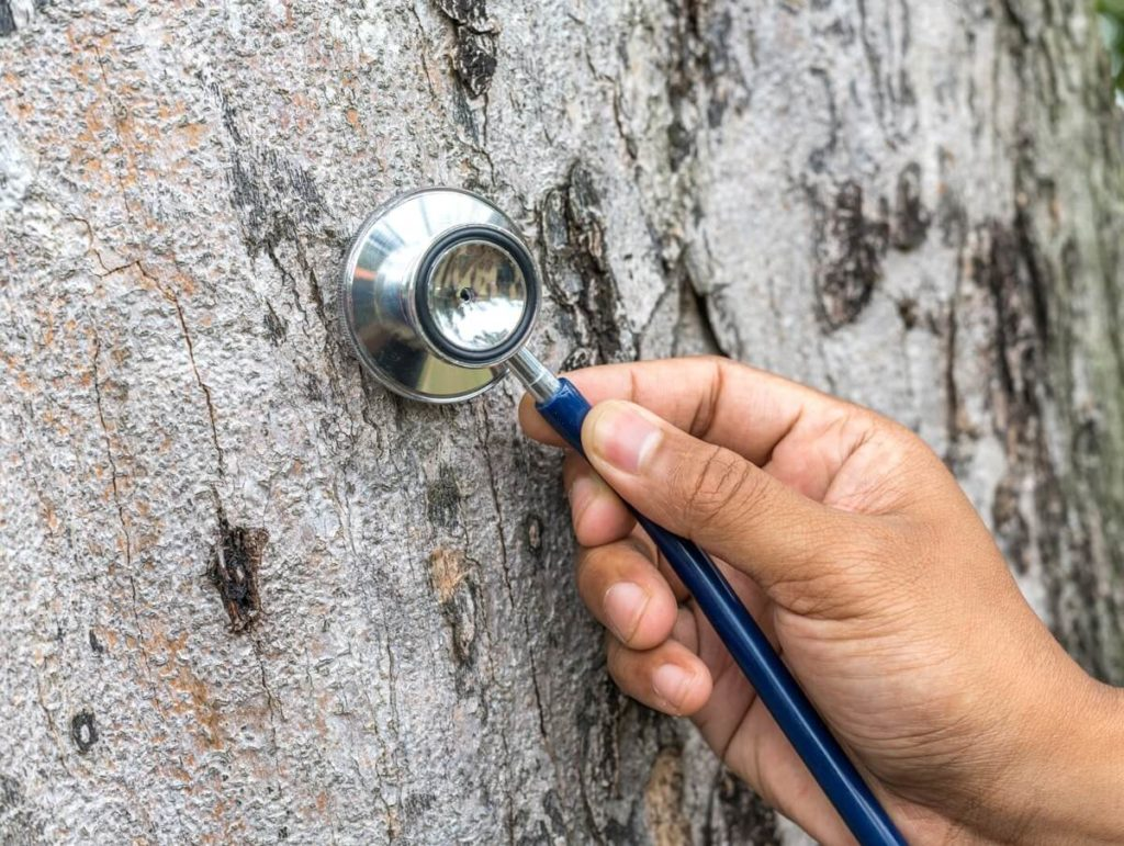Tree Assessments-Oakland Park FL Tree Trimming and Stump Grinding Services-We Offer Tree Trimming Services, Tree Removal, Tree Pruning, Tree Cutting, Residential and Commercial Tree Trimming Services, Storm Damage, Emergency Tree Removal, Land Clearing, Tree Companies, Tree Care Service, Stump Grinding, and we're the Best Tree Trimming Company Near You Guaranteed!