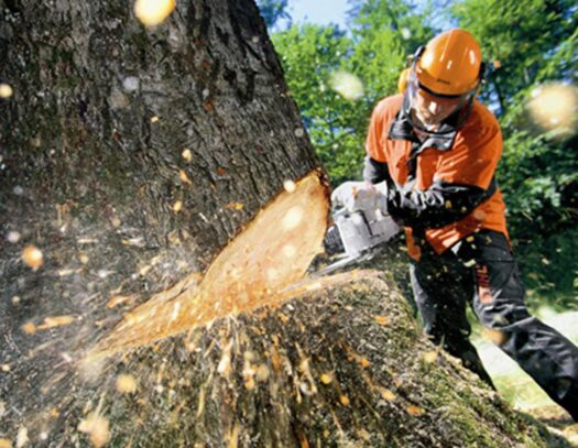 Tree Cutting-Oakland Park FL Tree Trimming and Stump Grinding Services-We Offer Tree Trimming Services, Tree Removal, Tree Pruning, Tree Cutting, Residential and Commercial Tree Trimming Services, Storm Damage, Emergency Tree Removal, Land Clearing, Tree Companies, Tree Care Service, Stump Grinding, and we're the Best Tree Trimming Company Near You Guaranteed!