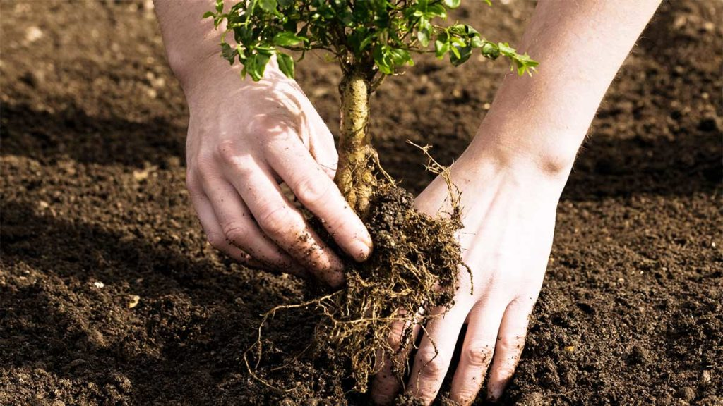 Tree Planting-Oakland Park FL Tree Trimming and Stump Grinding Services-We Offer Tree Trimming Services, Tree Removal, Tree Pruning, Tree Cutting, Residential and Commercial Tree Trimming Services, Storm Damage, Emergency Tree Removal, Land Clearing, Tree Companies, Tree Care Service, Stump Grinding, and we're the Best Tree Trimming Company Near You Guaranteed!