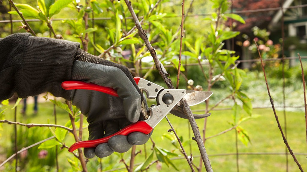 Tree Pruning-Oakland Park FL Tree Trimming and Stump Grinding Services-We Offer Tree Trimming Services, Tree Removal, Tree Pruning, Tree Cutting, Residential and Commercial Tree Trimming Services, Storm Damage, Emergency Tree Removal, Land Clearing, Tree Companies, Tree Care Service, Stump Grinding, and we're the Best Tree Trimming Company Near You Guaranteed!