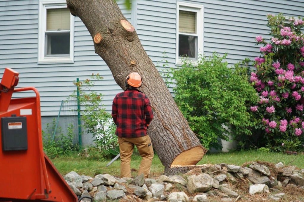 Tree Removal-Oakland Park FL Tree Trimming and Stump Grinding Services-We Offer Tree Trimming Services, Tree Removal, Tree Pruning, Tree Cutting, Residential and Commercial Tree Trimming Services, Storm Damage, Emergency Tree Removal, Land Clearing, Tree Companies, Tree Care Service, Stump Grinding, and we're the Best Tree Trimming Company Near You Guaranteed!