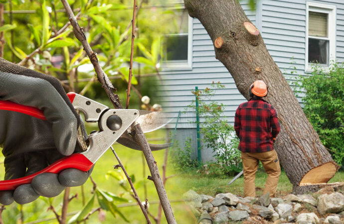 Tree pruning & tree removal-Oakland Park FL Tree Trimming and Stump Grinding Services-We Offer Tree Trimming Services, Tree Removal, Tree Pruning, Tree Cutting, Residential and Commercial Tree Trimming Services, Storm Damage, Emergency Tree Removal, Land Clearing, Tree Companies, Tree Care Service, Stump Grinding, and we're the Best Tree Trimming Company Near You Guaranteed!